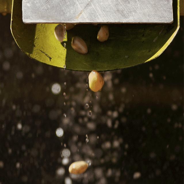 Pistachos-crudos
